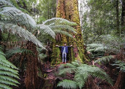 Styx Big Tree Reserve, courtesy Tourism Australia & Graham Freeman